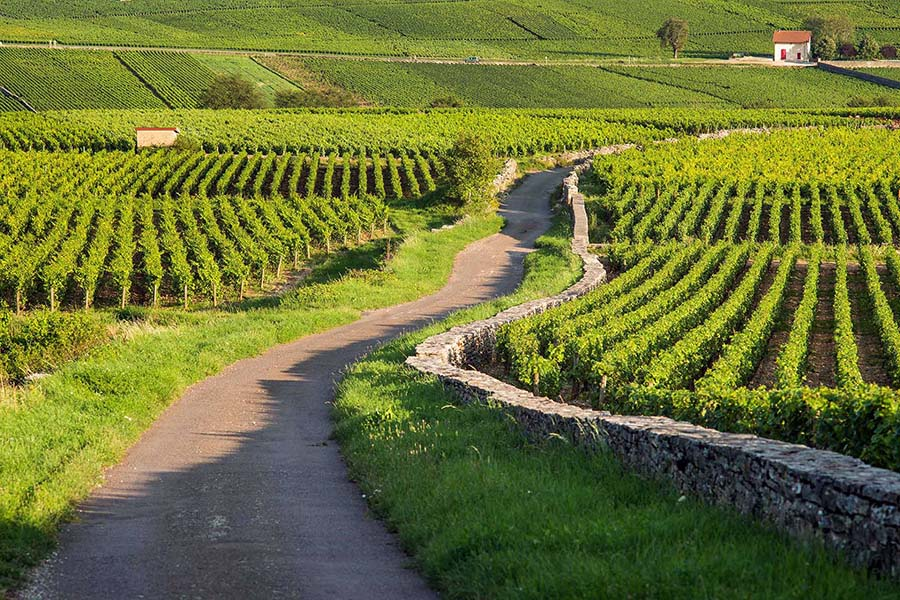 Vignobles Biterrois avec mur de pierres sèches
